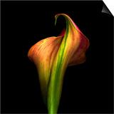 Calla Lily I Prints by Magda Indigo
