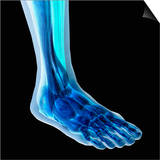 Human Ankle Showing Bones and Muscles Prints by Carol & Mike Werner