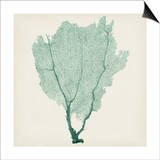 Sea Fan I Prints by  Vision Studio