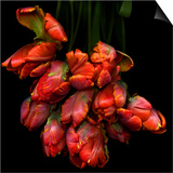 Parrot Tulips Prints by Magda Indigo