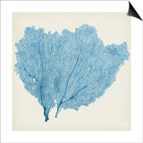 Sea Fan IV Prints by  Vision Studio