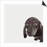 Dachshund Posters by Emily Burrowes