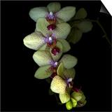 Orchid Cascade Prints by Magda Indigo