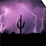 Cactus Silhouetted Against Lightning, Tucson, Arizona, USA Prints by Tony Gervis