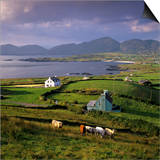 View over Allihies and Ballydonegan Bay, Beara Peninsula, County Cork, Munster, Republic of Ireland Prints by Stuart Black