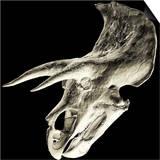 Triceratops Dinosaur Skull Prints by Smithsonian Institute