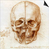 Skull Anatomy by Leonardo Da Vinci Print by Sheila Terry