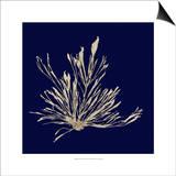 Seaweed on Navy III Prints by  Vision Studio