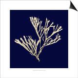 Seaweed on Navy II Posters by  Vision Studio