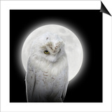 Isolated White Owl In Night With Moon Posters van  Angela_Waye