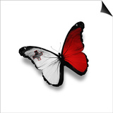 Maltese Flag Butterfly, Isolated On White Prints by  suns_luck