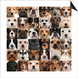 Collage Of 36 Dog Heads Prints by  Life on White
