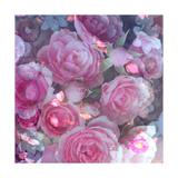 Romantic Pink Garden Roses Prints by Alaya Gadeh