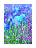 Blue Poppy Moon Meadow Photographic Print by Alaya Gadeh