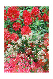 Flowers In The Garden I Photographic Print by Alaya Gadeh