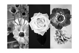 Black And White Flower Tryptich Photographic Print by Alaya Gadeh