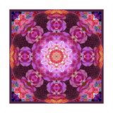 Deep Purple Pink Circle Blossom Photographic Print by Alaya Gadeh