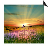 Sunset Is In The Field Posters by  nadiya_sergey