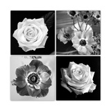 Black And White Blossom Quartett Photographic Print by Alaya Gadeh