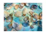 Seashells On Blue Photographic Print by Alaya Gadeh