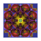 All IS One Mandala Photographic Print by Alaya Gadeh