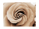 Sepia Rose Photographic Print by Alaya Gadeh