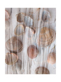 Seashell In Translucent Beachgrass Photographic Print by Alaya Gadeh