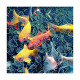 Ornamental Fishes Photographic Print by Alaya Gadeh