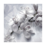 White Orchids Monotone Photographic Print by Alaya Gadeh