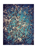 Spring Tree I Photographic Print by Alaya Gadeh