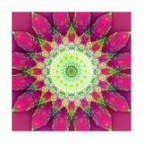Heartrise Flower Mandala Photographic Print by Alaya Gadeh