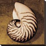 Nautilus Stretched Canvas Print by Caroline Kelly