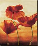Poppies in Sunlight II Stretched Canvas Print by Andrea Kahn