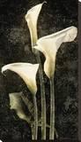Callas II Stretched Canvas Print by John Seba