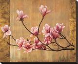 Pink Magnolias Stretched Canvas Print by Erin Lange