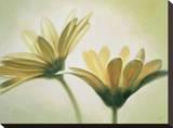 Evanescence I Leinwand von Massimo Valli