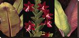 Red Orchids and Palm Leaves Stretched Canvas Print by Rodolfo Jimenez