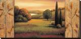 Sunlit Stretched Canvas Print by Rachael Sullivan