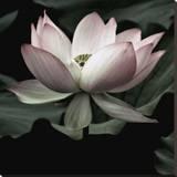 The Lotus I Lærredstryk på blindramme af Andy Neuwirth