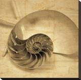 Chambered Nautilus Stretched Canvas Print by John Seba