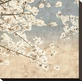 Cherry Blossoms II Stretched Canvas Print by John Seba