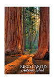 Grants Grove - Kings Canyon National Park, California Prints by  Lantern Press
