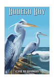 Bodega Bay, California - Blue Heron Prints by  Lantern Press