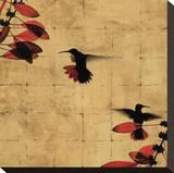 Colibri I Stretched Canvas Print by Chris Donovan