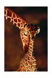 Girafe et son petit Posters par  Lantern Press