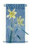 View of Blooming Daffodils - Gloucester, VA Posters av  Lantern Press