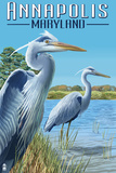 Annapolis, Maryland - Blue Herons Poster by  Lantern Press