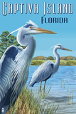 Captiva Island, Florida - Blue Herons in grass Poster by  Lantern Press