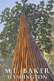 Mt. Baker, Washington - Looking Up Redwood Posters by  Lantern Press