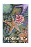 Bodega Bay, California - Tidepool Print by  Lantern Press